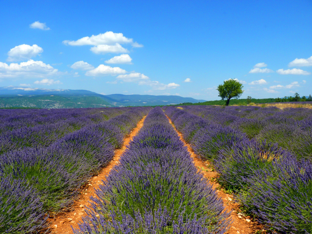 Top 3 Places to Learn French in the South of France