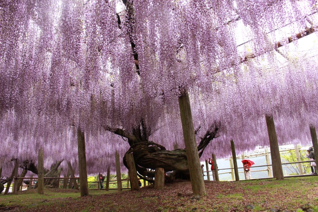 Best Places to Visit at Easter - Fukuoka, Japan