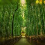 Japanese Courses Japan